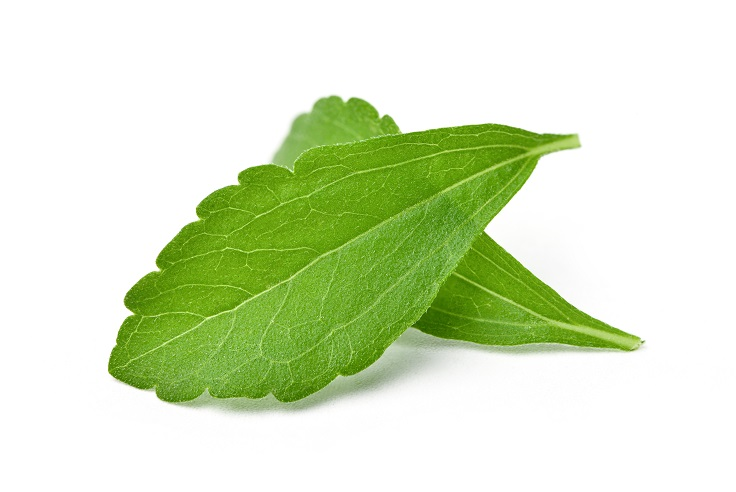 Close-up of Two fresh Stevia leaves (Stevia rebaudiana Bertoni)  isolated on white background.